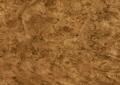 Magnolie Mars 9583